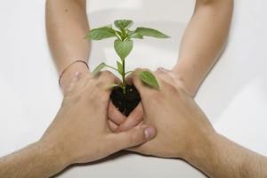 pianta tra le mani